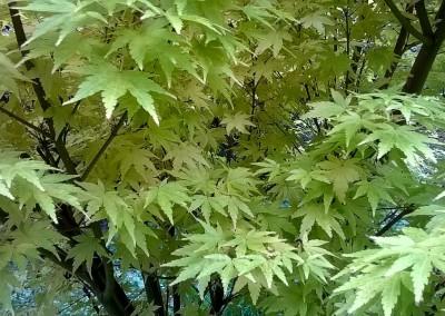 trees-10