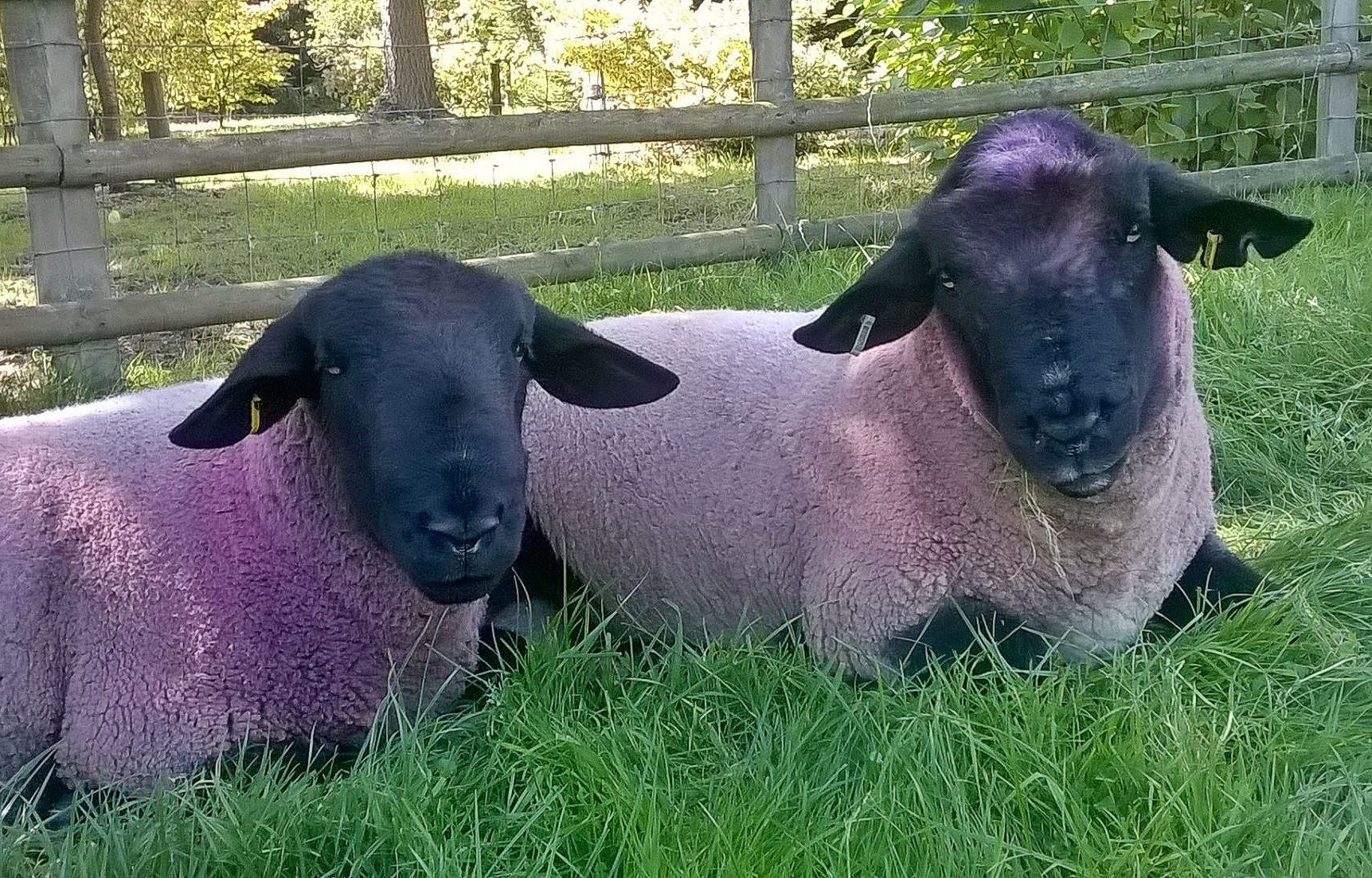 Contact US >> Farm animals - Bodenham Arboretum