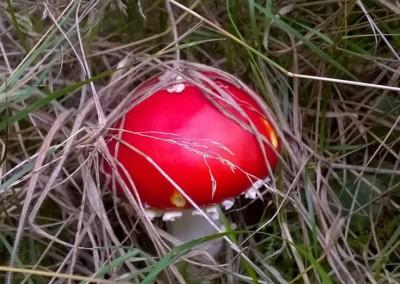 fungi-4